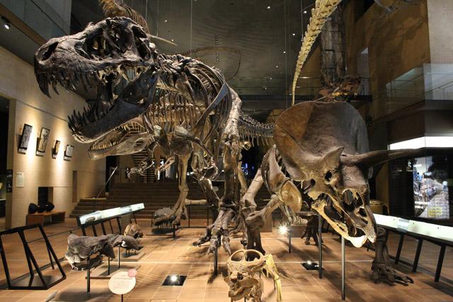 北九州市立いのちのたび博物館「Web事前予約制」導入