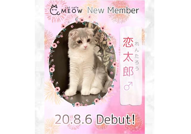 大名の猫カフェMEOW 新メンバー恋太郎くんデビュー!