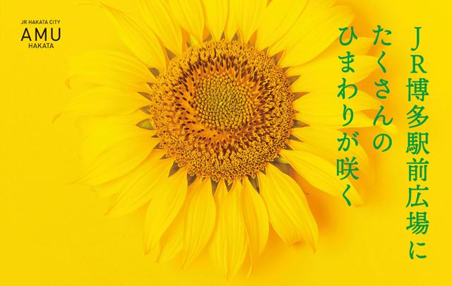 JR博多駅前広場にたくさんのひまわりが咲く「九州に笑顔を咲かせようプロジェクト〜ひまわりのように上を向いて歩こう〜」