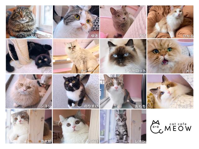 大名の猫カフェMEOWで人気投票2020開催!