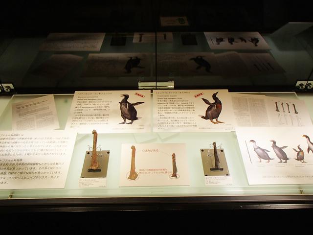 いのちのたび博物館で約3000万年前の海鳥プロトプテルム類の新属新種2種の実物化石展示公開!