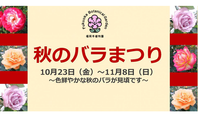 福岡市植物園で約280種1300株の秋のバラが見頃に「秋のバラまつり」開幕