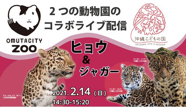 大牟田市動物園が沖縄こどもの国とコラボ『ヒョウ&ジャガー』ライブ配信へ