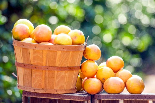 フロリダ州政府柑橘局が「フロリダグレープフルーツ」を太宰府天満宮に奉納
