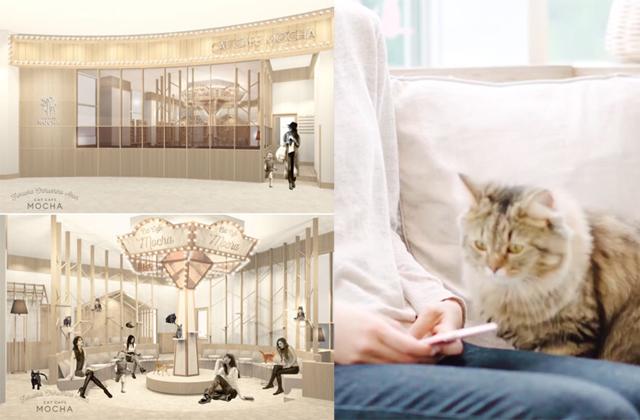 カフェのように居心地がよくリビングのように優しい空間「猫カフェ MOCHA(モカ)イオンモール筑紫野店」2月26日オープン