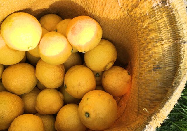 新宮町 立花山のふもとで果樹を生産する「いわくま果樹園」さんから『はるか』をお届け