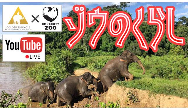 大牟田市動物園がGolden Triangle Asian Elephant Foundationとコラボ「ゾウのくらし」ライブ配信へ