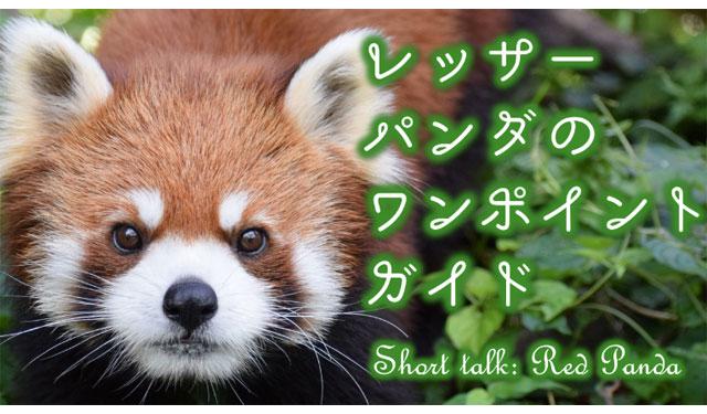 大牟田市動物園で「レッサーパンダのワンポイントガイド」開催へ
