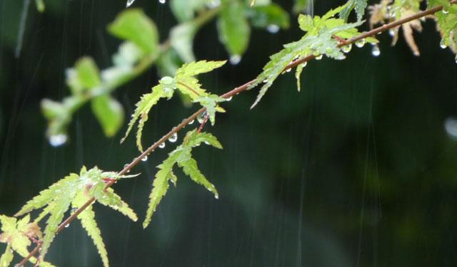 九州南部が平年より19日早い「梅雨入り」