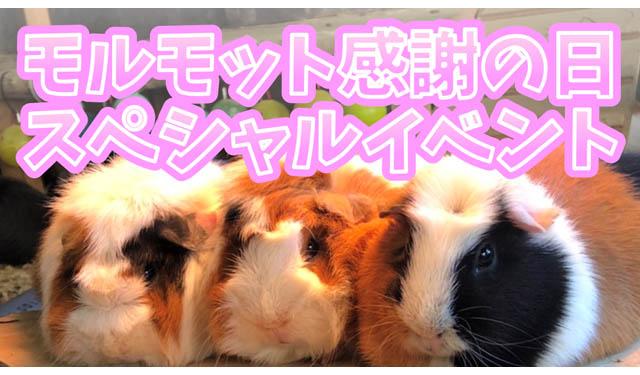 大牟田市動物園で「モルモット感謝の日スペシャルイベント」開催へ