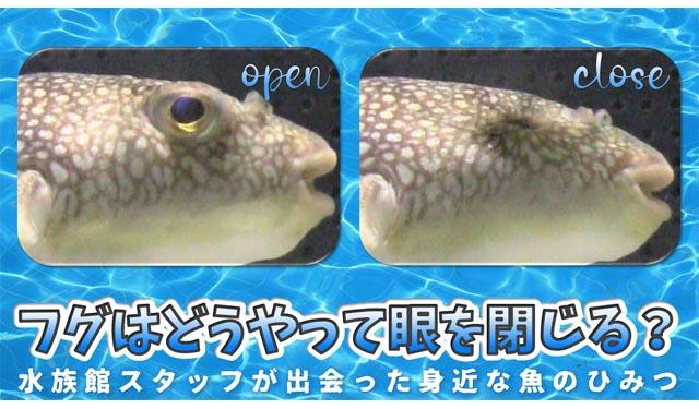 行動に隠された謎… 大牟田市動物園が「水族館スタッフが出会った身近な魚のひみつ」ライブ配信へ